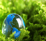 environmental courses online